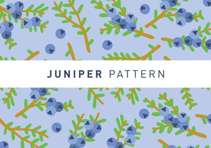 Juniper Pattern Wallpaper Vector