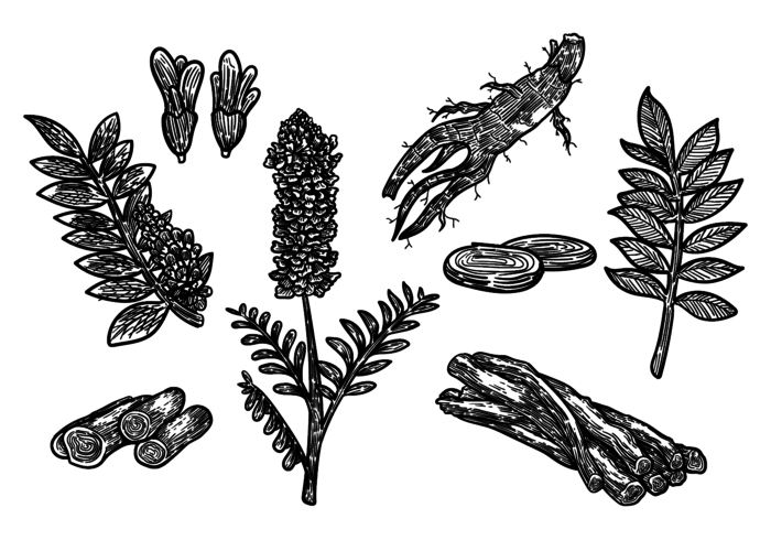 Free Hand Drawn Licorice Vector