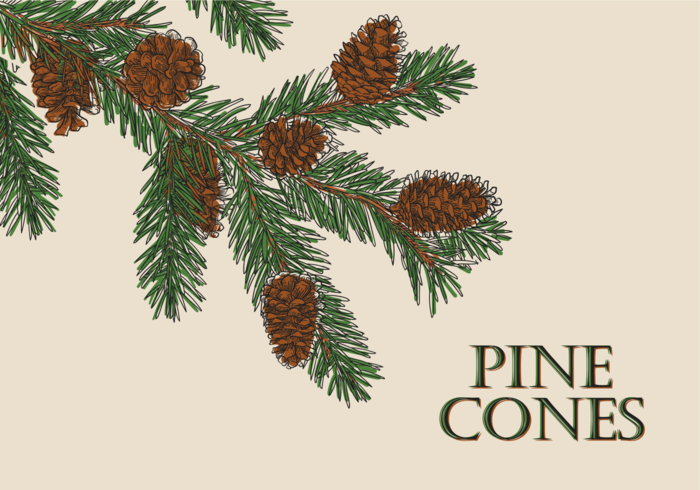 Free Hand Drawn Pine Cones Vectors
