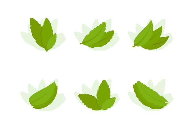 Free Outstanding Stevia Vectors