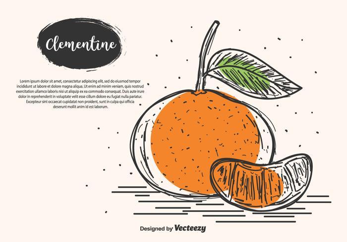 Mão, desenhado, clementine, vetorial, fundo