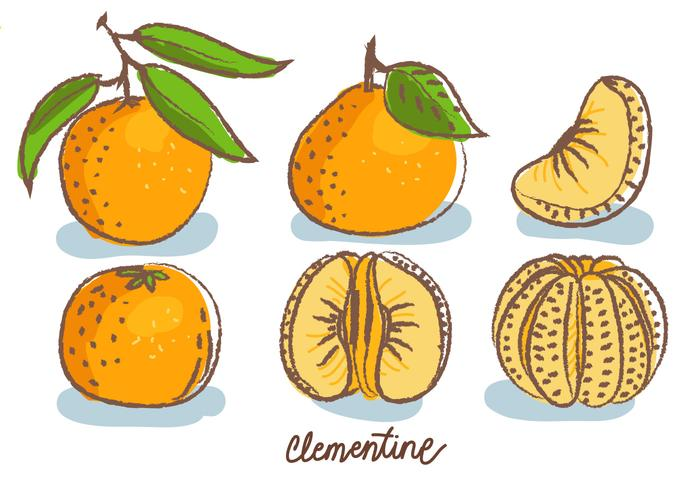 Clementine Doodle Sketch Vector Illustration