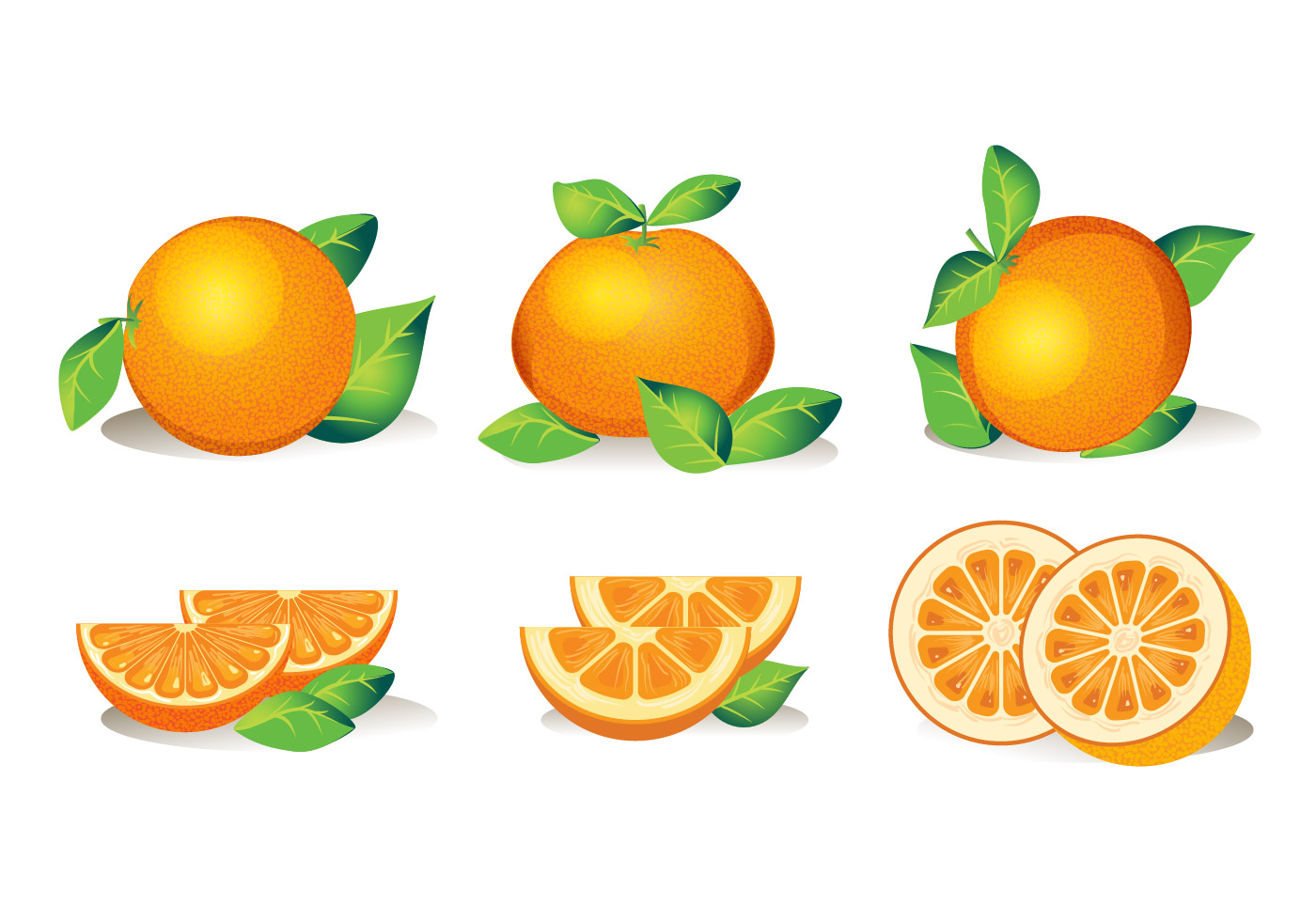 Orange Fruit Vector Set of Isolated...