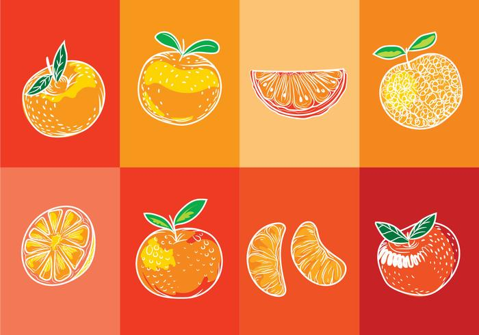 Set of Isolated Clementine Fruits on Orange Background with Art Line Style