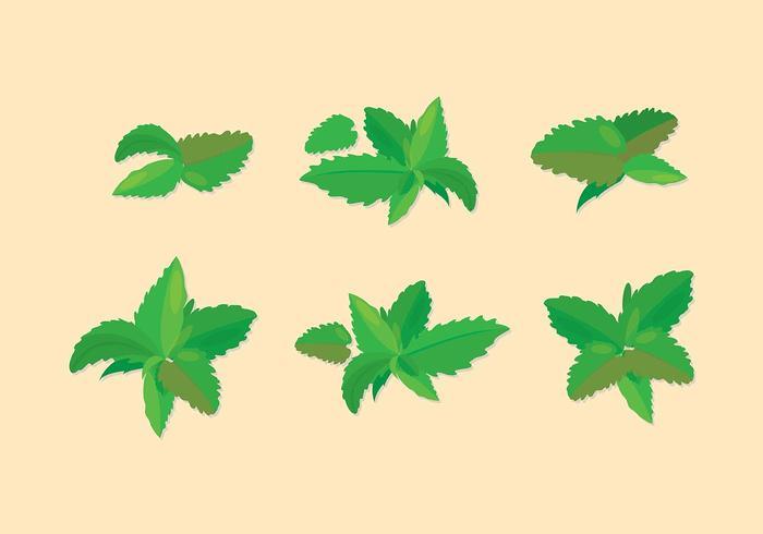 Stevia Icon Vector