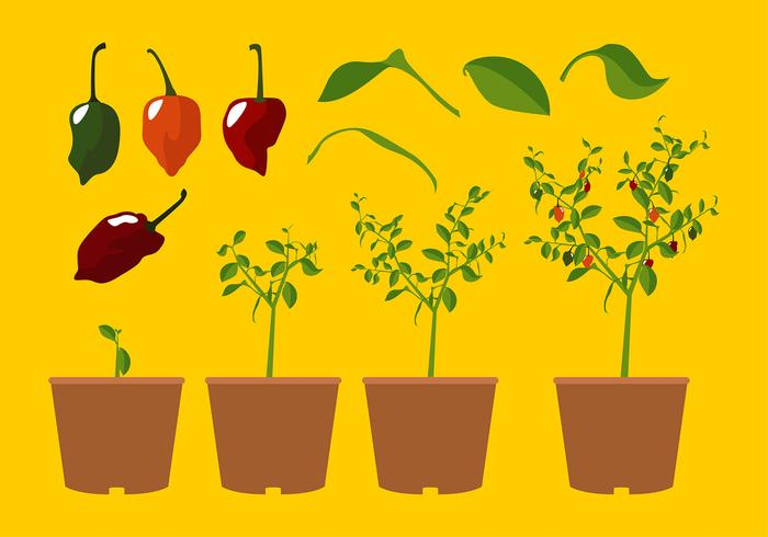 Habanero Plant Free Vector