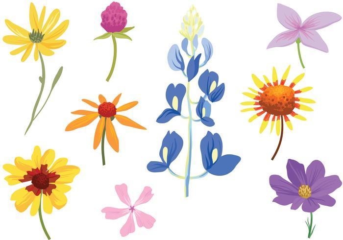 Gratis Färgrika Wildflower Vektorer