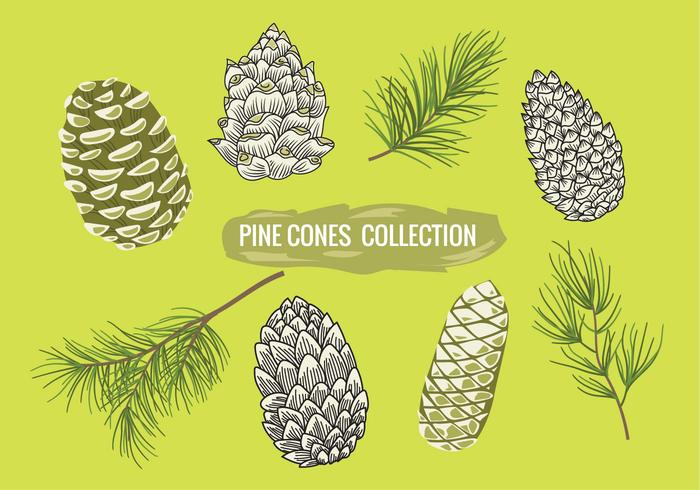 Pine Branch with Pine Cones Set Collection