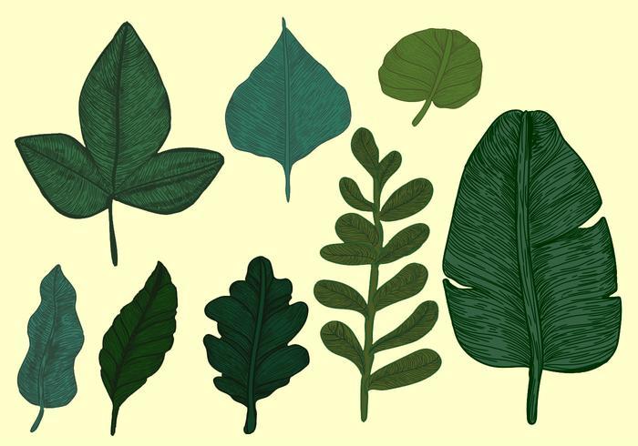 Vintage Style Botanical Leaves Vector Set
