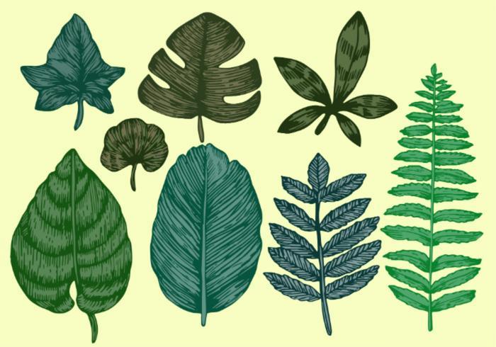 Vecteurs de feuilles botaniques style vintage