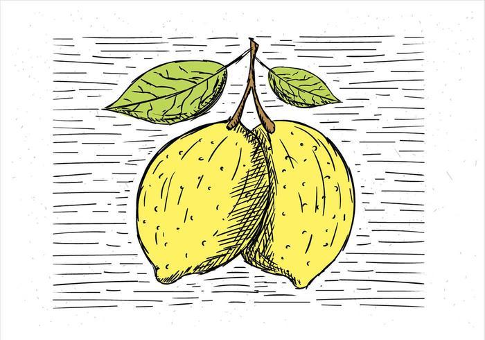 Mano libre dibujado vector ilustración de limón