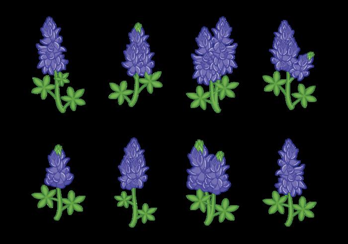 Bluebonnet Flower Vectors