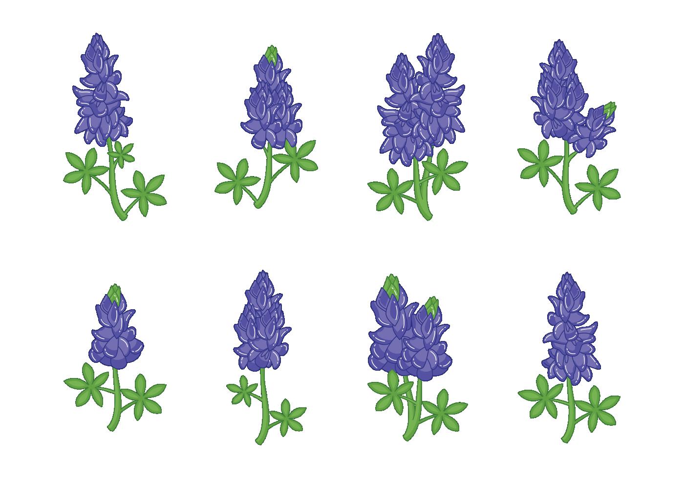 bluebonnet flower vectors download free vector art stock
