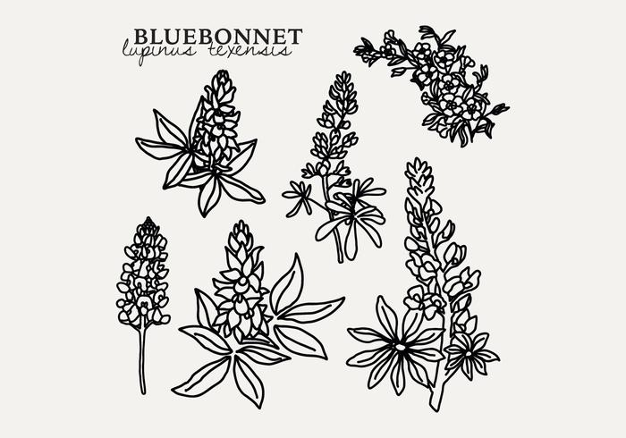 Botanical Bluebonnet