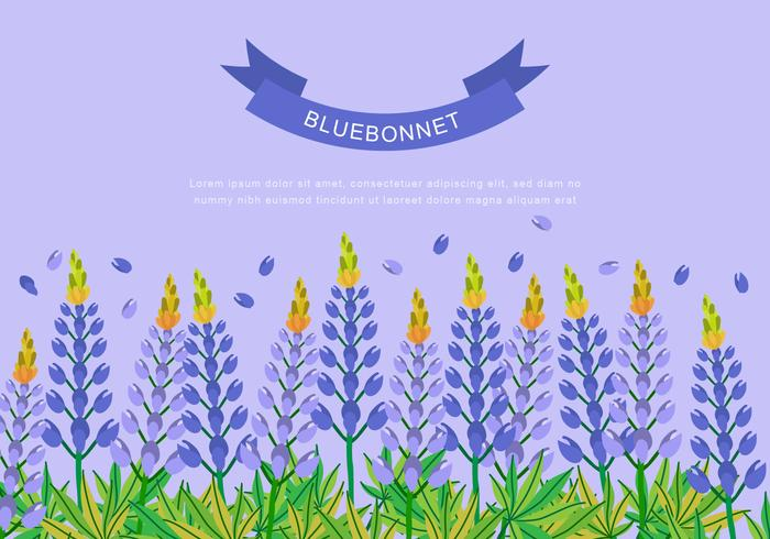 Bluebonnet for Background Design