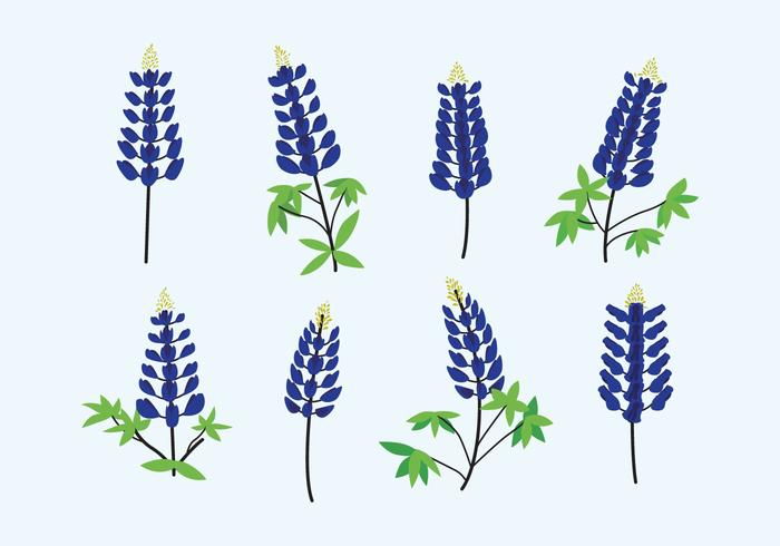 Bluebonnet Vector