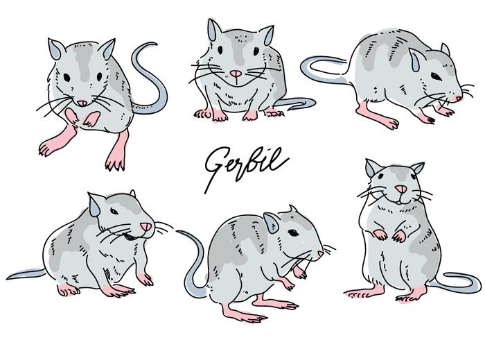 Gerbil Mouse Pose Hand Drawn Doodle Vector Illustration