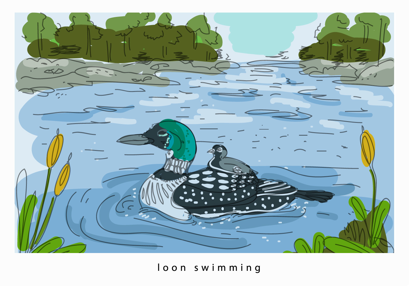Loon Swimming In Lake Hand Drawn Vector Background
