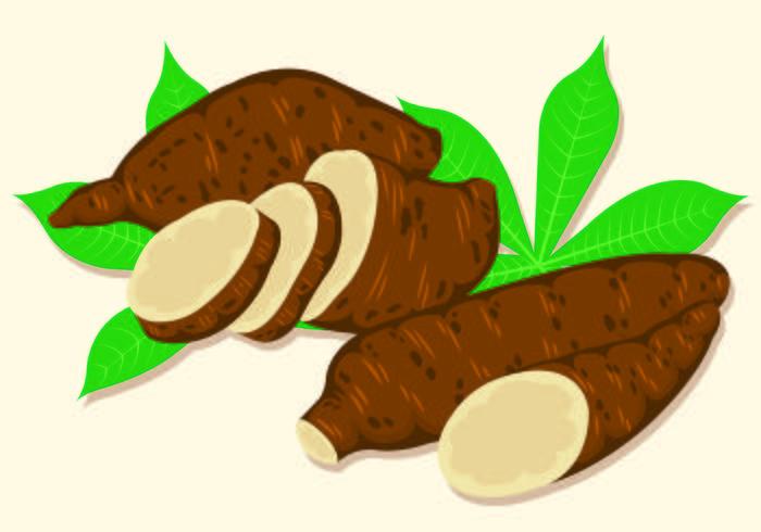 Vector Illustration Of Cassava