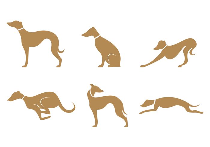 Gold Brown Whippet Silhouette Vector