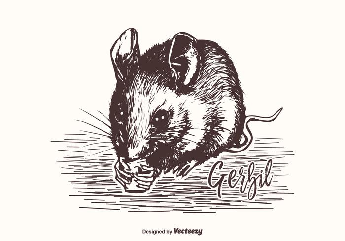 Hand Drawn Gerbil Vector Illustration