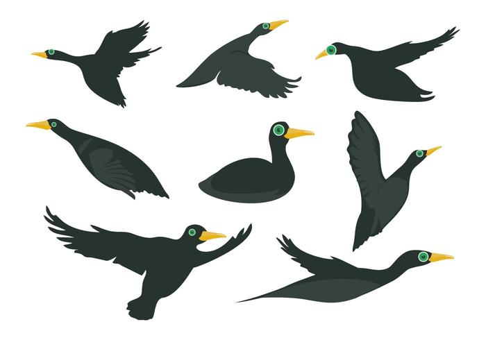 Freier schwarzer Loon Vogel Vektor