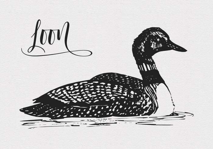 Vector Quirky Drawing Of A Loon Bird