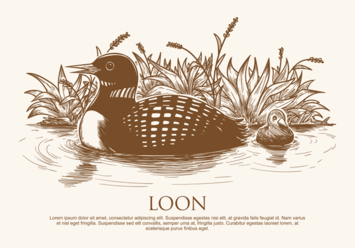 Free Hand Drawn Loon  Vectors