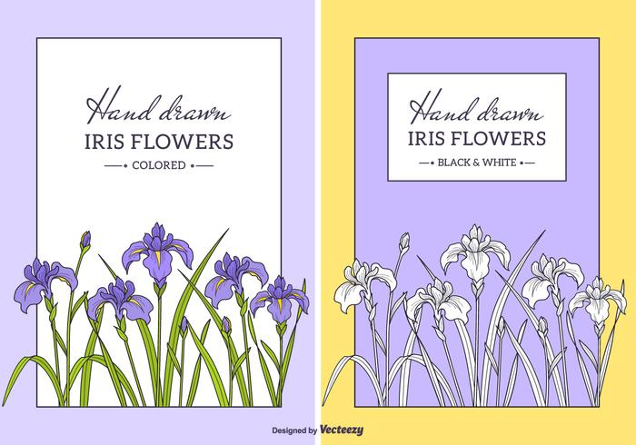 Hand gezeichnet Iris Blumen Vektor
