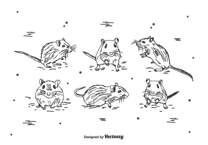 Ensemble de vecteur de gerbille à dessins à main