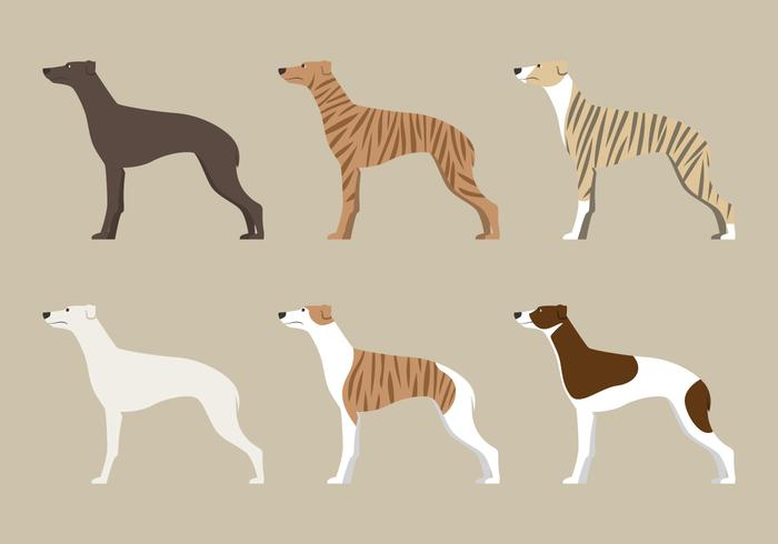 Whippet Dog Vector