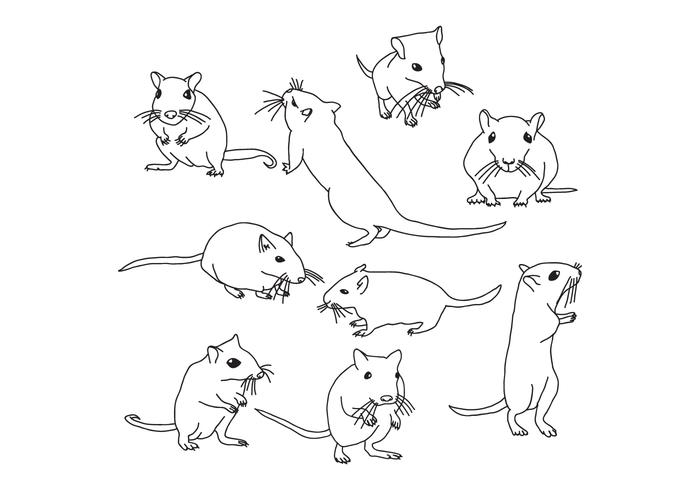 Gerbil Ratón