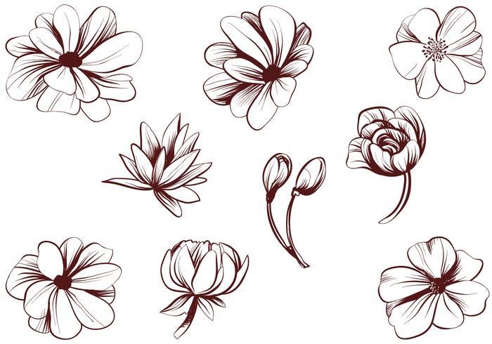 Free Vintage Detailed Flower Vectors