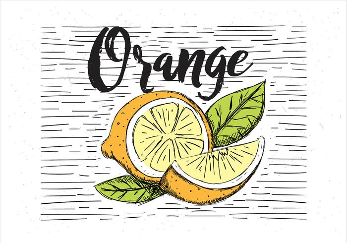 Gratis Vektor Handdragen Orange Illustration