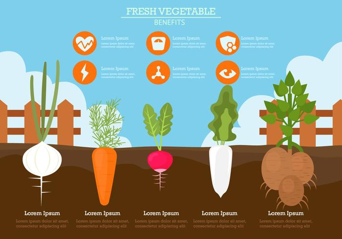 Benefits Of Fresh Vegetable