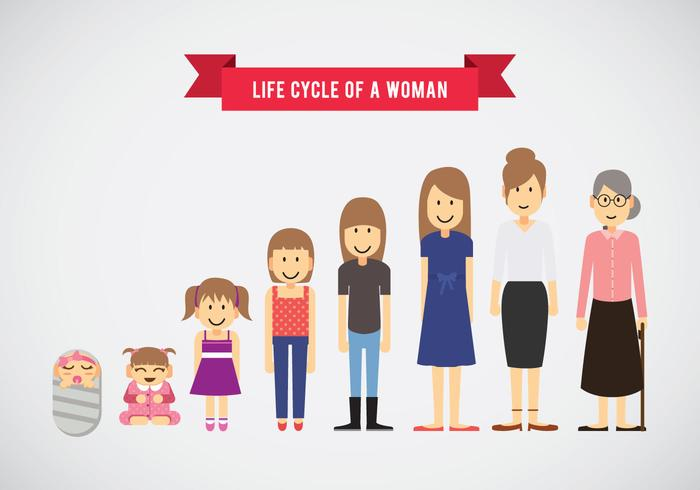 Life Cycle of Woman Vector