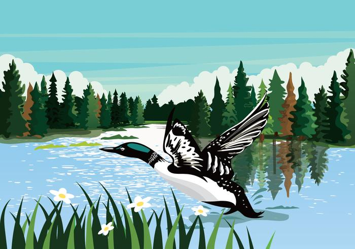 Loon Swimming In River Vector Background Illustration