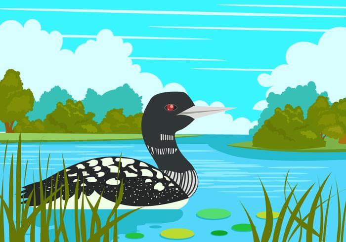 Loon Bird In the Lake