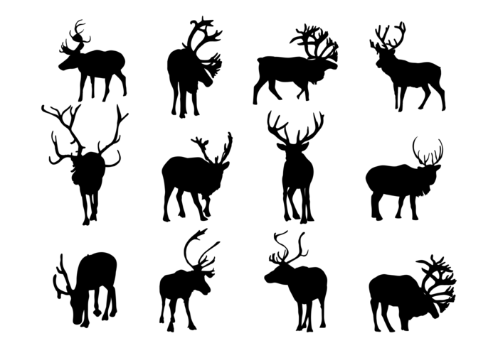 Siluetas de Caribú Vector