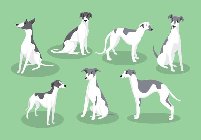 Vectores del perro de Whippet