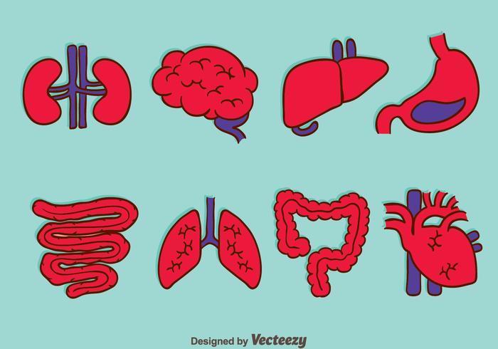 Human Organ Collection Vectors
