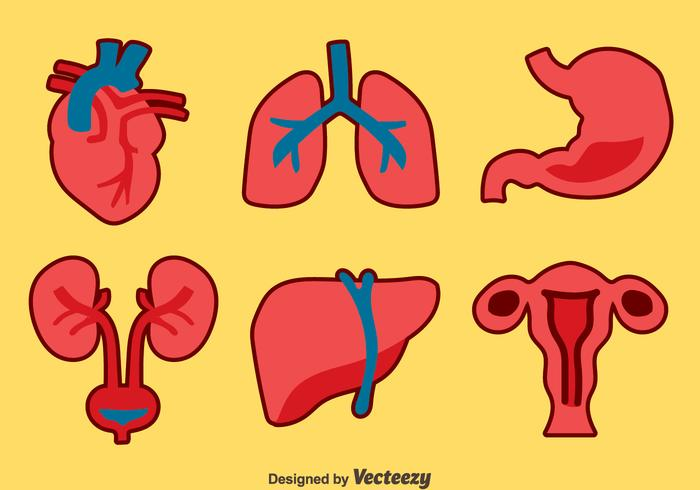 Human Organs Collection Vector Sets Download Free Vector Art