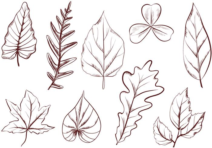 Free Vintage Leaves Vectors