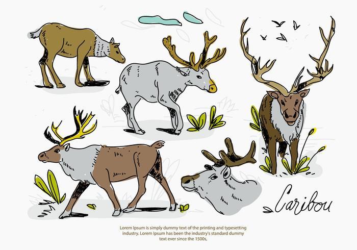 Caribou Deer Sketch Pose Hand Drawn Vector Illustration