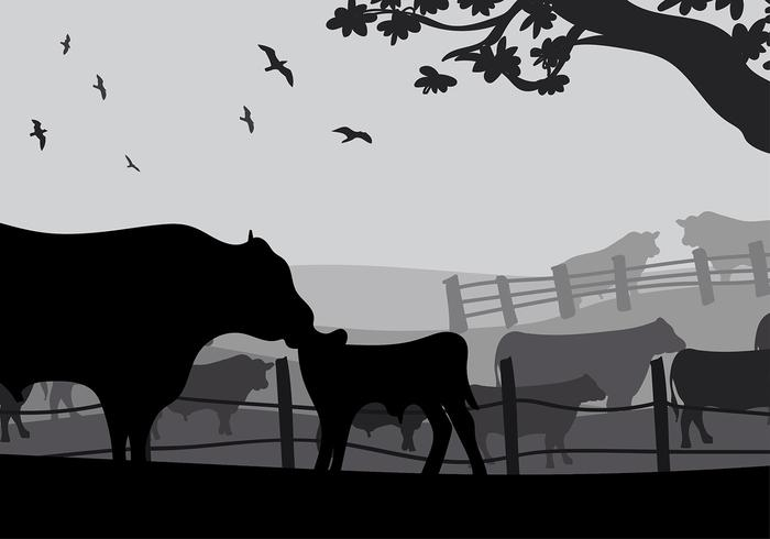 Angus Cow Silhouette Gratis Vector