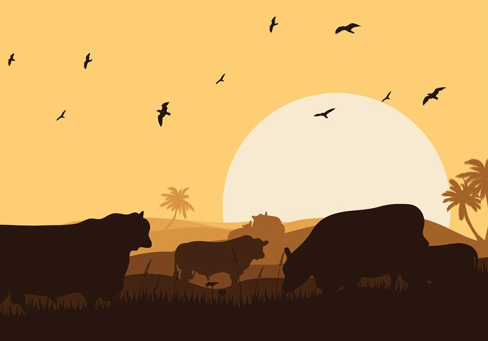 Angus cow silhouette sunset vector livre