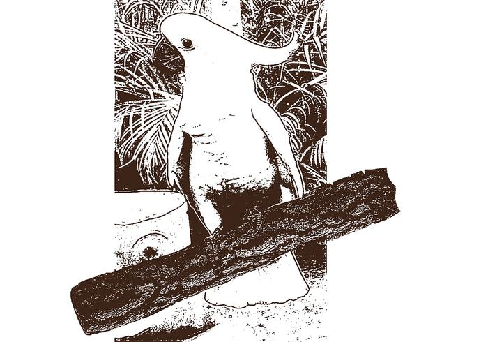 Parrot Bird Lithograph Vector
