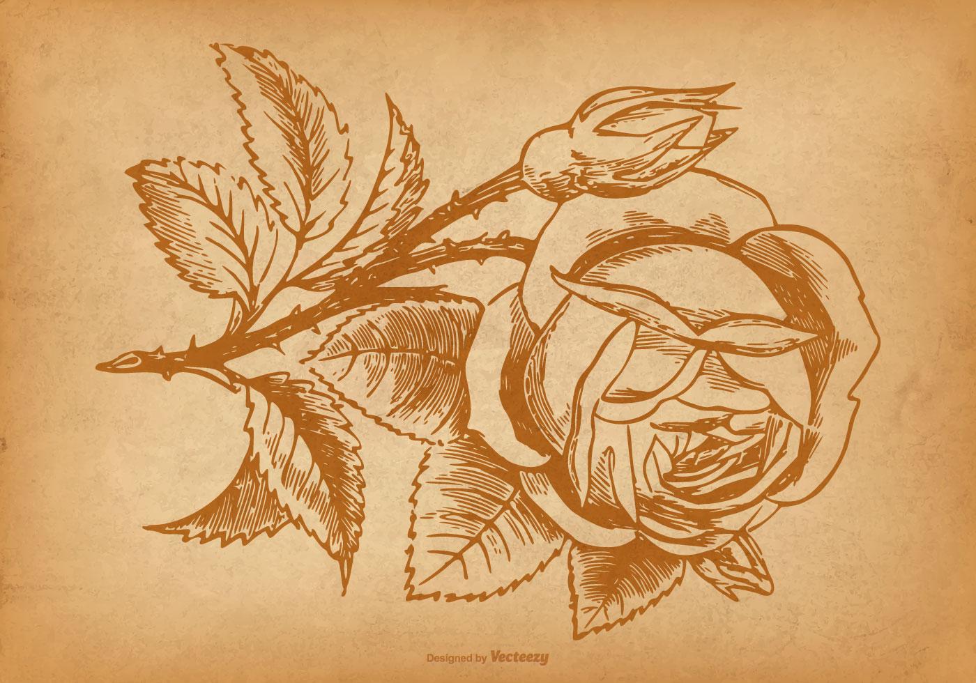 Vintage Rose Background Free Vector Art
