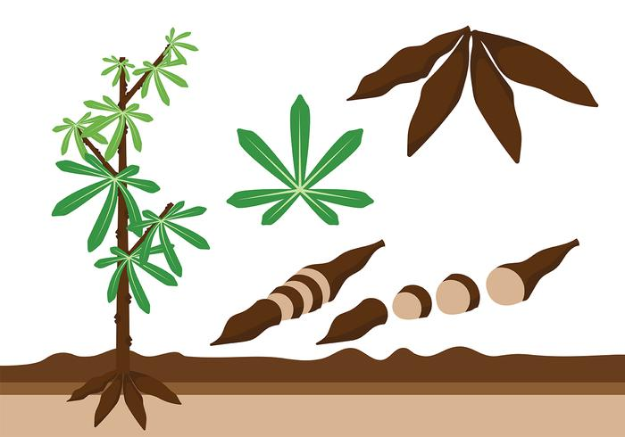 Cassava pictogram vector