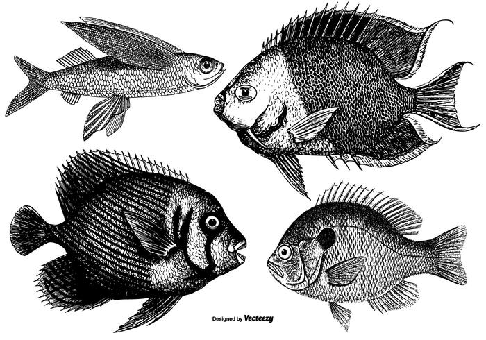 Vintage Fishes Collection
